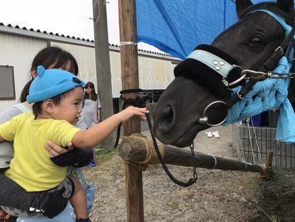 馬に触ってみました。