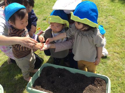 手の上に種を乗せてもらい、土の中に植えました。