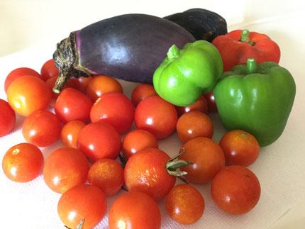 こんなにたくさん収穫できました!調理員さんにおいしく調理してもらって、どんなメニューに変身するかな?楽しみだね!