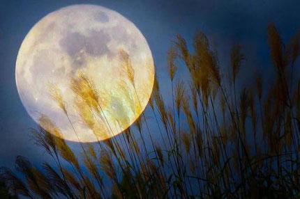 今日は中秋の名月です。今年は8年ぶりに満月と重なり、最も月が満ちた状態の名月が見られるそうですよ。一般的には中秋の名月=満月かと思われがちですが、必ずしも一致するとは限らないみたいなので、ぜひ今夜はお空を見上げてみてくださいね♪