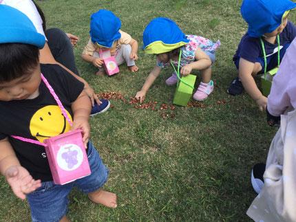 どんぐりを手に取ると不思議そうに見つめる子や、先生に嬉しそうに見せてくれる子もいましたよ。拾ってはお散歩バッグに、大切そうに入れていましたよ♪