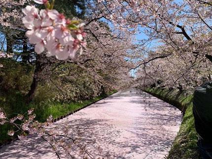 2019.4月の桜🌸