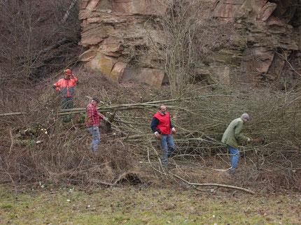Die Südwand des alten Steinbruchs in Güglingen wird freigelegt