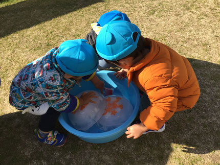 ひかりぐみさん、氷を触って遊びました。