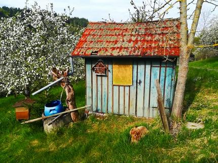 Frühling am Wegesrand - entdeckt beim Gassigehen - ©Sandi