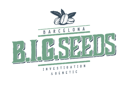 big seeds, semillas Big Seeds, Barcelona Investigation & genetic, bigseeds, semillas marihuana barcelona big seeds