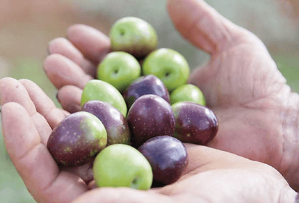 Acquista olio extravergine di oliva bio