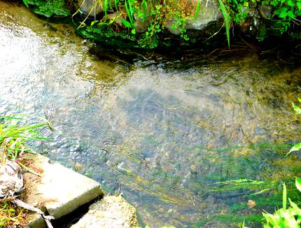 稲田に流れる無色透明の山水