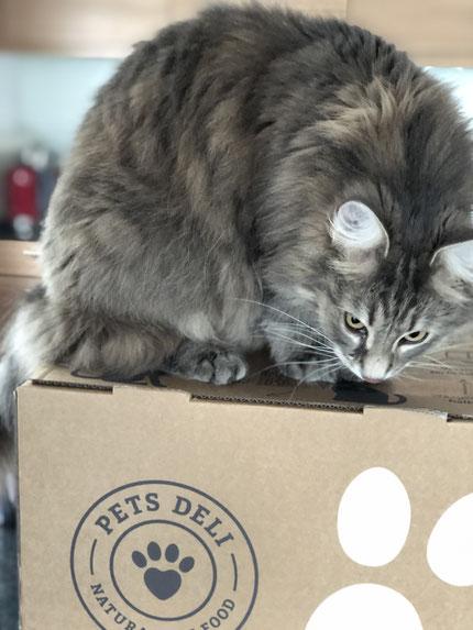 Pets Deli Katzenfutter