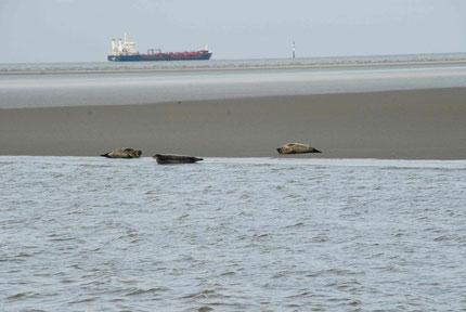 Blick auf die Seehundbänke