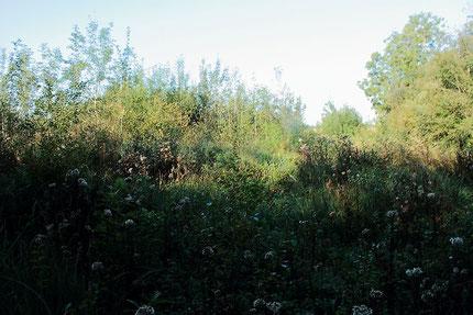 Station d'orchidées dans le Médoc (33)  avant l'intervention
