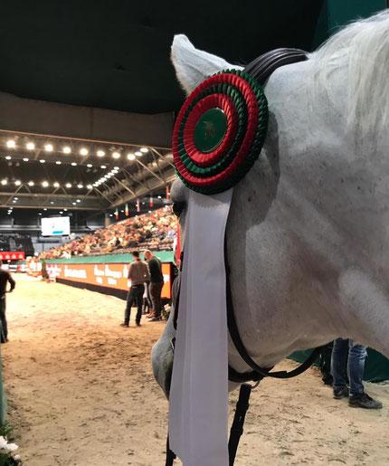 Blick aus der Perspektive des Pferds auf den Parcours bei der Partner Pferd in Leipzig.