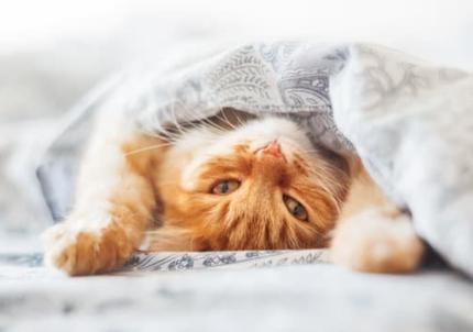 En finir avec les allergies aux poils d'animaux - chats - grâce à la méthode LEAA