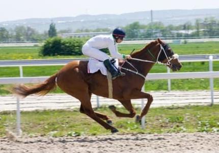 libération émotionnelle des chevaux  - méthode LEAA