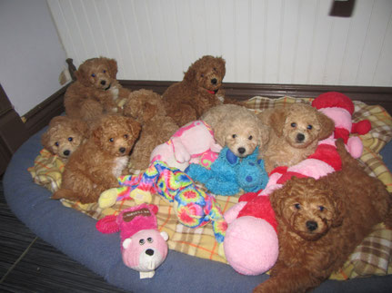 Les 8 petits bébés de Mia.... croquable!!