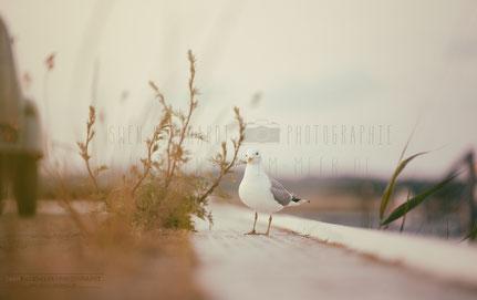 Fotografie Insel im Meer, Swen Burkhardt