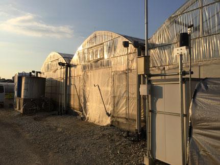 中期展張型ビニールハウス2棟、 全滅を防ぐためそれぞれを離れた場所に
