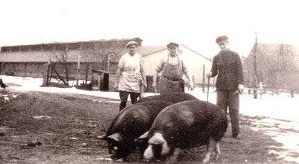Zwei der Schweineställe (Angelse und Mühlenkamp) in den 1960er Jahren mit Schweinemäster Rudi Rathmann.23