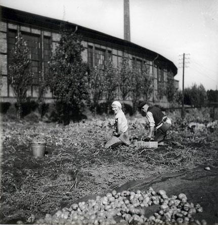 Kirchweyhe, Richtweg, am Südschuppen, 1958
