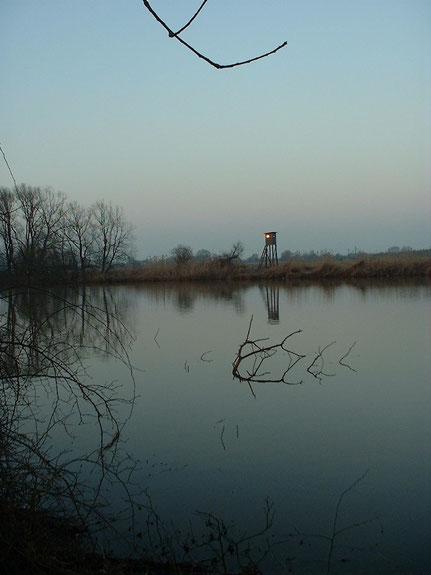 Der See wird von vielen Vögeln aufgesucht.