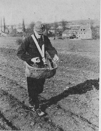 Mit Schultergurt: Kartoffel aus dem Korb oder der Wanne; in den 50er Jahren saß man bequem hinter dem Trecker
