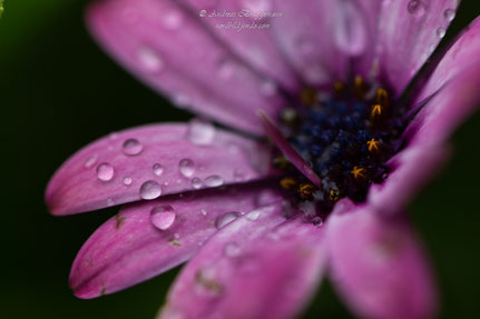after the rain_02