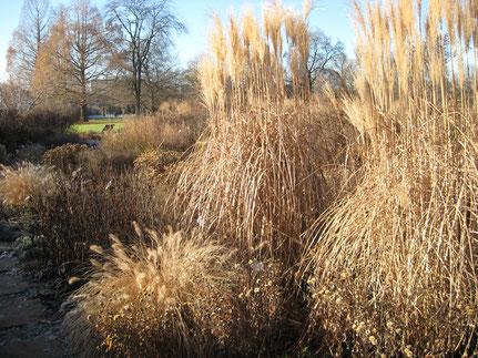 Gräser als interessante Blickfänge im winterliche Staudenbeet
