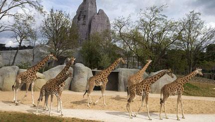 visite guidée animaux sauvages paris