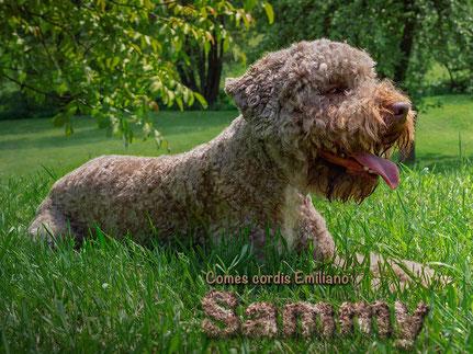 Comes cordis Emiliano »Sammy«  x  Ariela