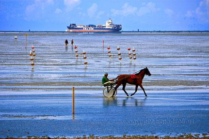 Pferderennen im Watt in Cuxhaven