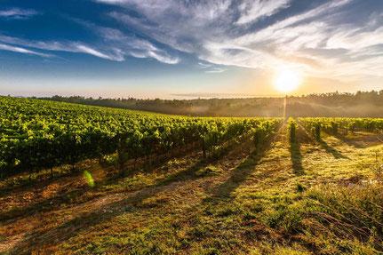 Landschaft mit Weinbergen bei Heilbronn