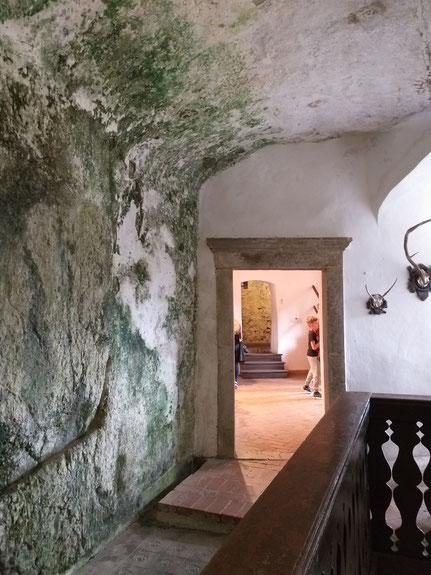 Predjama Burg innen, bemoste Wand des Felsens