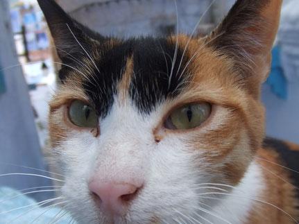 モロッコ旅行/青い街シャエウン/実加と遊ぶ猫