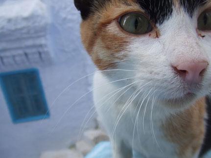 モロッコ/シャウエン在住日本人の遊び方は猫