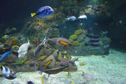 Nachbildung Barierre Reef