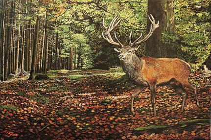 Rothirsch im Wald 40 x 60  Preis 300 €