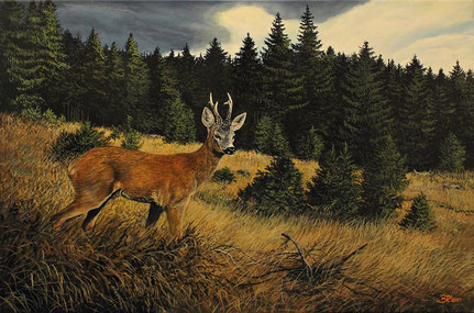 Rehbock auf Waldwiese 40 x 60    Preis 300 €