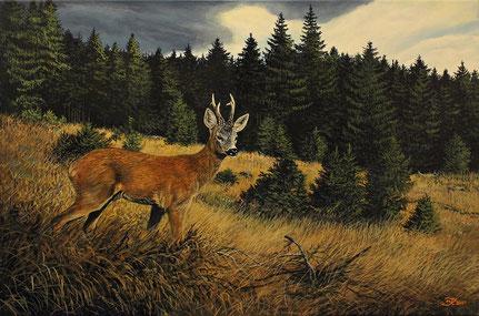 Rehbock auf Waldwiese 40 x 60