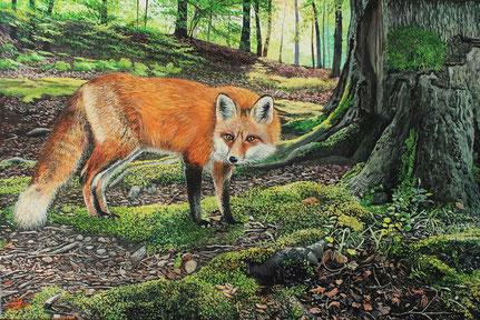 Fuchs (2020) 40 x 60 Keilrahmen