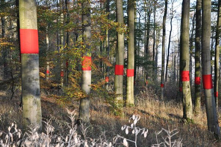 """bleeding trees"" Herbstbild"
