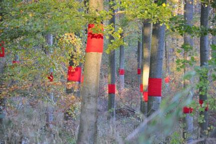 """""""bleeding trees"""" Frühlingsbild"""