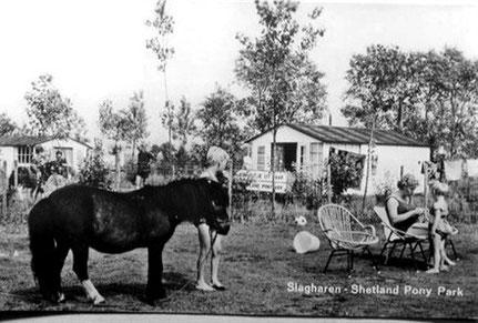 Hoewel vele dorpelingen het hem ontraadden, opende Henk Bemboom met Pinksteren 1963 het 'Shetland Pony Vakantiecentrum Slagharen' later bekend als 'Ponypark Slagharen', waarmee het Overijsselse dorp Slagharen bekend werd…