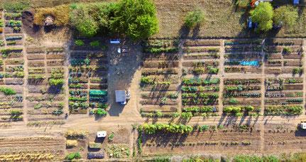 Mikro Landwirtschaft Gemeinschaftsacker Feudenehim Mitte urban gardening farming solidarische Landwirtschaft