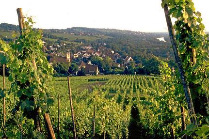 Markgräflerland mit Weinreben