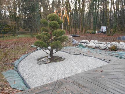niwaki sur pinus sylvestris à Champagnole, Jura(39), Franche-Comté
