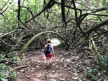 Branch tunnel, Hiking Raemaru, Hiking in Rarotonga,