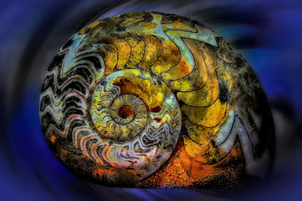 Mateo Brigande, La galerie de Mateo, détails, proxy, ammonite, fossile, lumières, bokeh,
