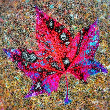 Mateo Brigande, La galerie de Mateo, détails, proxy, feuille d'automne, lumières, bokeh,