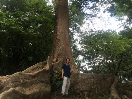 木材調達記 アンドウッド インドネシア 新潟