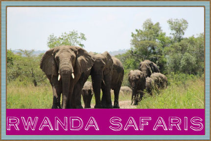 rwanda-gorilla-tracking-tours.jpg